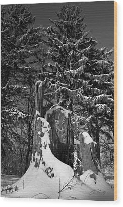 Wood Print featuring the photograph Midwest Sequoia by Ed Cilley
