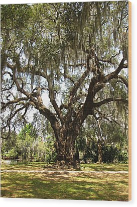 Wood Print featuring the photograph Mighty Oak by Beth Vincent