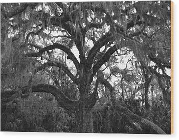 Mighty Oak Wood Print by Kimberly Oegerle