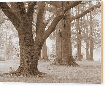 Wood Print featuring the photograph Mighty Oaks by Jim Whalen