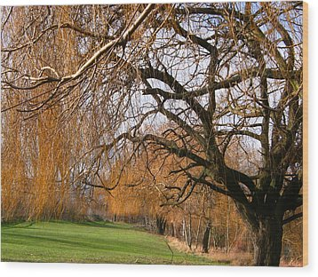 Wood Print featuring the photograph Mild Winter In Mayesbrook Park - Dagenham by Mudiama Kammoh