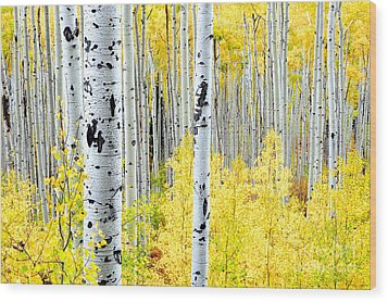 Miles Of Gold Wood Print by The Forests Edge Photography - Diane Sandoval