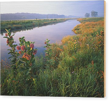 Milk Weed Morning Wood Print