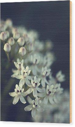 Milkweed  Wood Print by Saija  Lehtonen