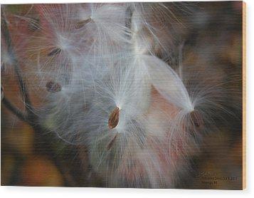 Milkweed Seed Wood Print by Steph Maxson