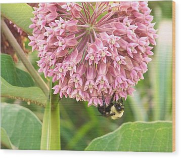 Wood Print featuring the photograph Milkweed by Shirley Moravec