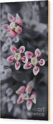 Milkweed Snowflakes Wood Print