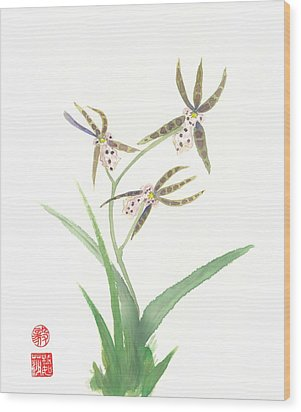 Miltonia Orchid Wood Print