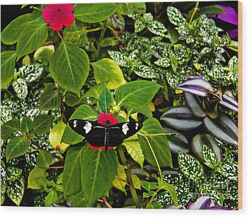 Mindo Butterfly At Rest Wood Print by Al Bourassa