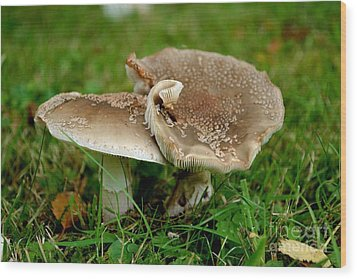 Wood Print featuring the photograph Mingling Mushrooms by Scott Lyons