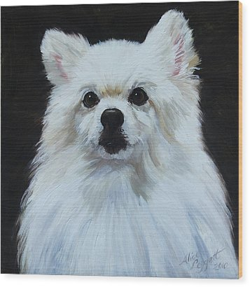 Miniature American Eskimo Dog Wood Print