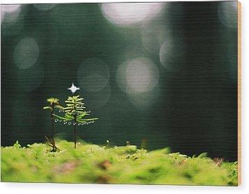 Miniature Christmas Tree Wood Print by Cathie Douglas