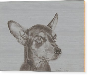 miniature pinscher Tronter Wood Print