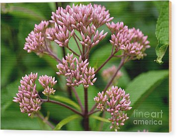 Wood Print featuring the photograph Miniature Purple Cones by Scott Lyons