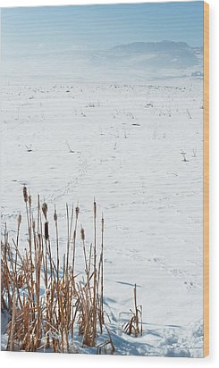 Minimalist Cattail Prairie In Colorado Wood Print by Julie Magers Soulen