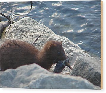 Mink With A Round Goby Wood Print by Randy J Heath