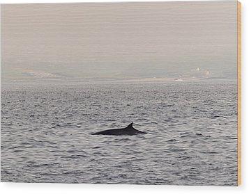 Minke Whale Wood Print by Kai Bergmann