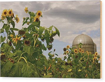 Wood Print featuring the photograph Minot Farm by Alice Mainville