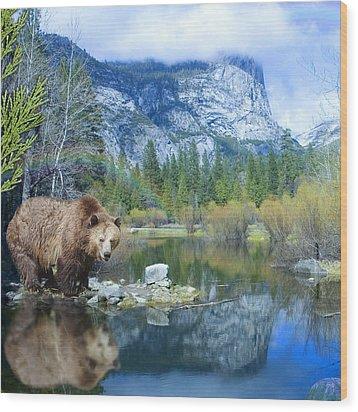 Mirror Lake Bear Wood Print by Alixandra Mullins