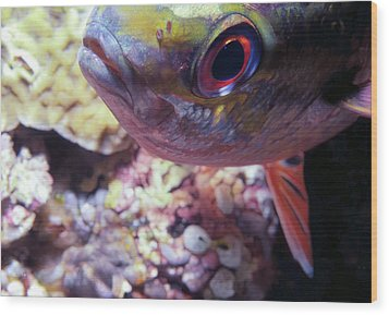 Miscellaneous Fish 5 Wood Print by Dawn Eshelman