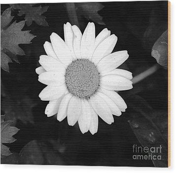 Miss Daisy Wood Print by Andrea Anderegg