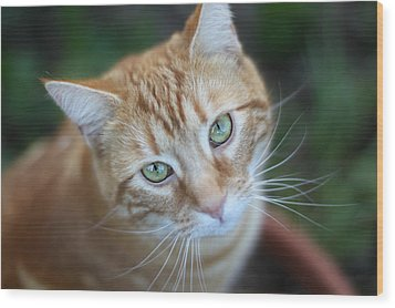 Miss Lucy Mcgillicuddy Wood Print by Melanie Lankford Photography