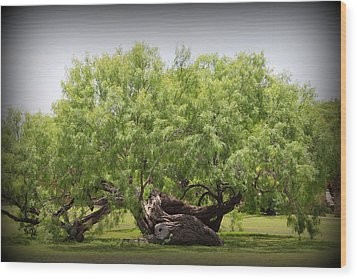 Mission Espada - Tree Wood Print by Beth Vincent