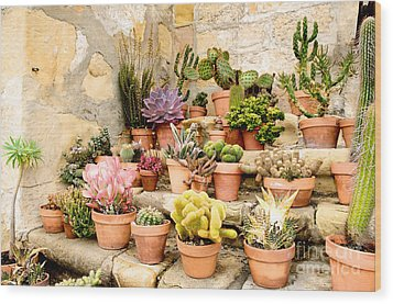 Mission Succulents Wood Print by Vinnie Oakes