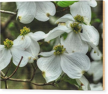 Wood Print featuring the photograph Mississippi Dogwood II by Lanita Williams