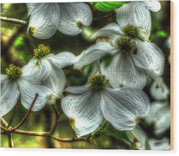 Mississippi Dogwood Wood Print