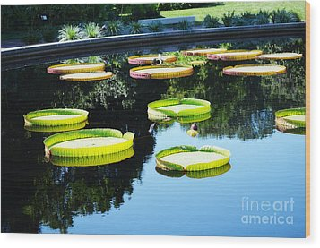 Missouri Botanical Garden Giant Lily Pads Wood Print by Luther Fine Art