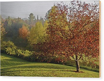 Wood Print featuring the photograph Misty Autumn Morning by Alice Mainville