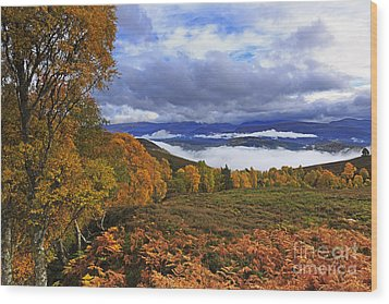 Misty Day In The Cairngorms II Wood Print by Louise Heusinkveld