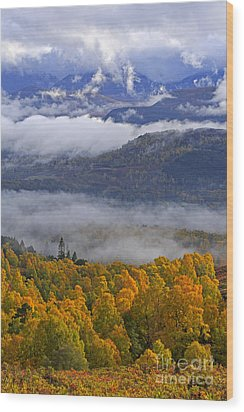 Misty Day In The Cairngorms Wood Print by Louise Heusinkveld
