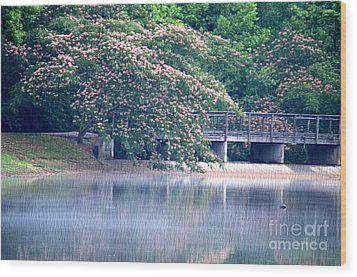Misty Mimosa Reflections Wood Print by Maria Urso