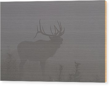 Misty Morning Bull Elk Wood Print by Doug McPherson