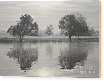 Misty Morning In Bushy Park London 2 Wood Print