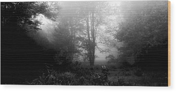 Misty Morning With Tree Silhouettes Wood Print