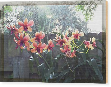 Misty Orchids Wood Print by Ginny Schmidt