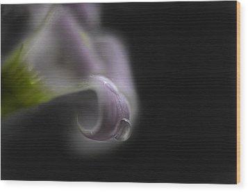 Misty Shamrock 1 Wood Print