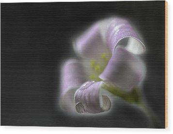 Misty Shamrock 3 Wood Print