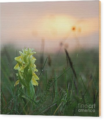 Misty Sunset Orchid Wood Print by Kennerth and Birgitta Kullman