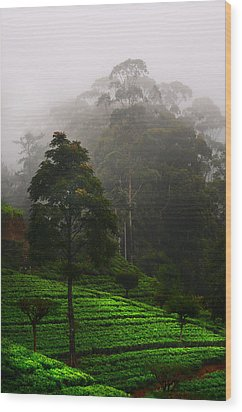 Misty Tea Plantations In Nuwara Eliya  Wood Print by Jenny Rainbow