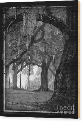 Misty Walk Through The Oak Trees Wood Print