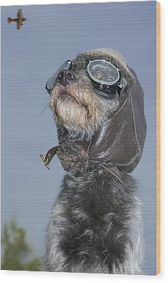 Mixed Breed Dog Dressed In Leather Cap Wood Print by Darwin Wiggett