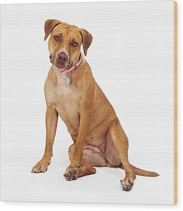 Mixed Breed Female Large Dog Wood Print by Susan Schmitz