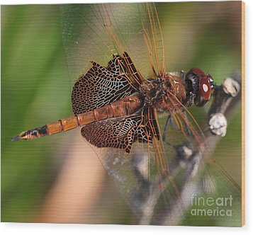 Mocha And Cream Dragonfly Profile Wood Print