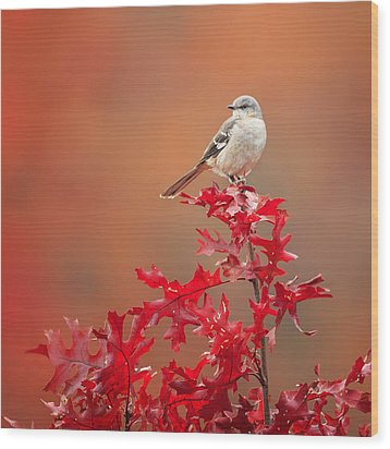 Mockingbird Autumn Square Wood Print by Bill Wakeley