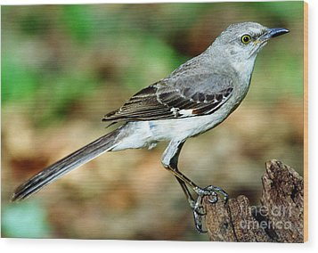 Mockingbird Wood Print by Millard H. Sharp
