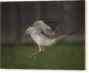 Mockingbird No. 2 Wood Print by Rick Barnard